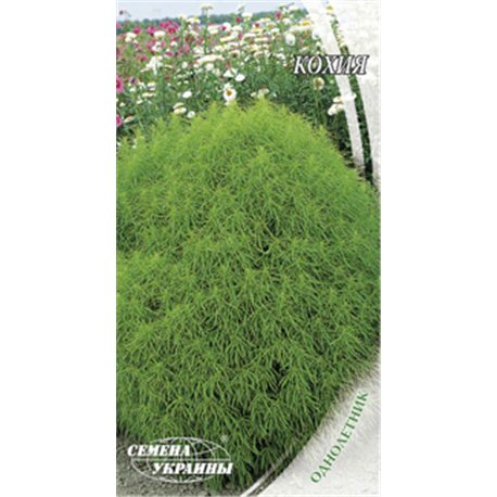 Семена кохии Летний кипарис(срок годн. 2021)