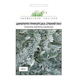 Семена цинерария Серебряная пыль