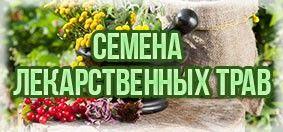 Купить семена лекарственных растений
